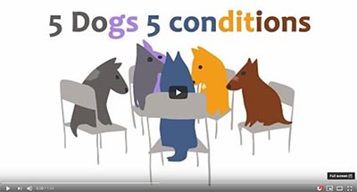 Cover image for link to 5 Dogs Mental Health Stories video